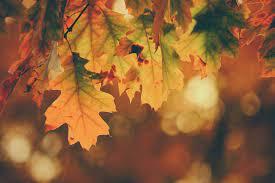 Autumn Promotions