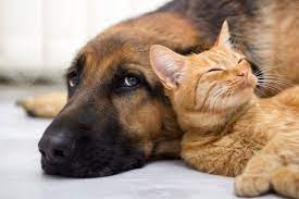 Promotional Pet Accessories